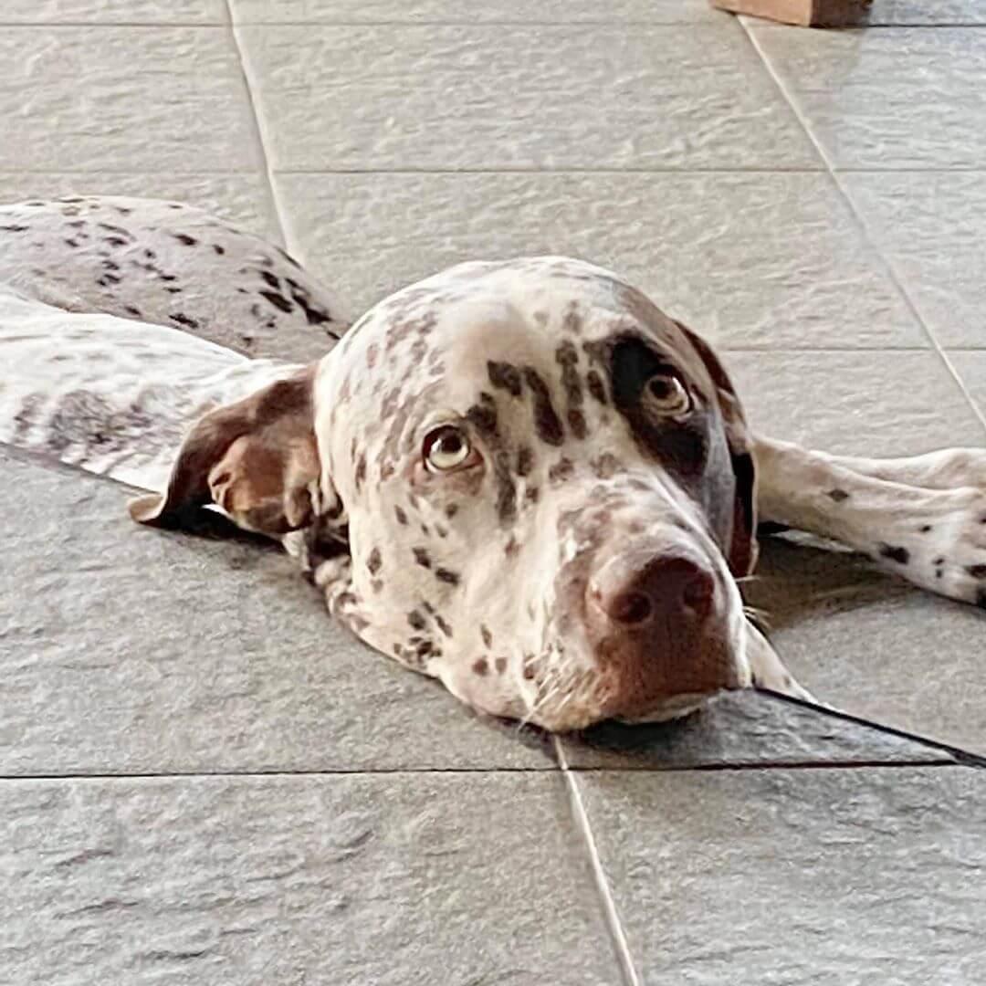 lovely dog at nusa dua beach grill